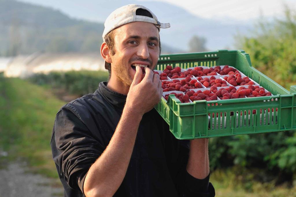 """Saisonfrüchte & Beeren - die """"Königsdisziplin"""", Himbeeren"""