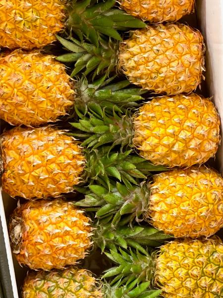 Baby Ananas aus Mauritius