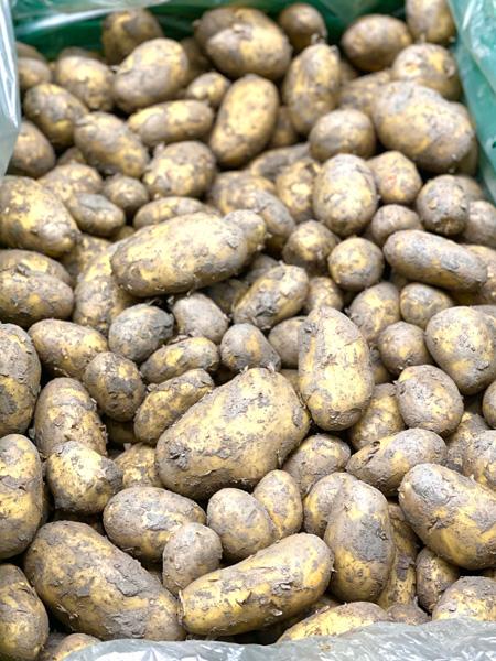Frühkartoffeln ungewaschen Schweiz
