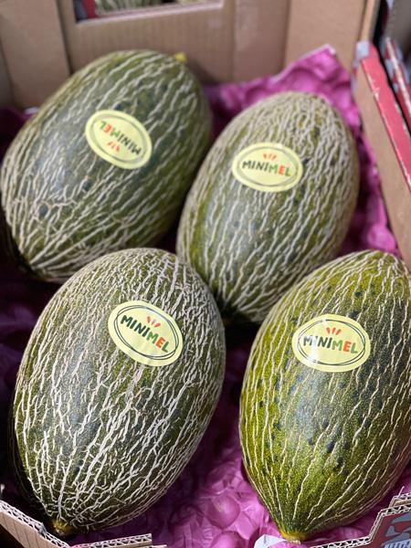 Piel de Sapo Melone Spanien