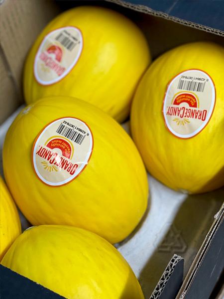 Topaz Melonen Spanien