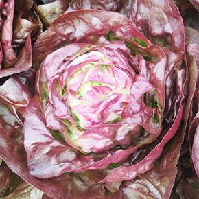 welFRIsch Kopfsalat rot
