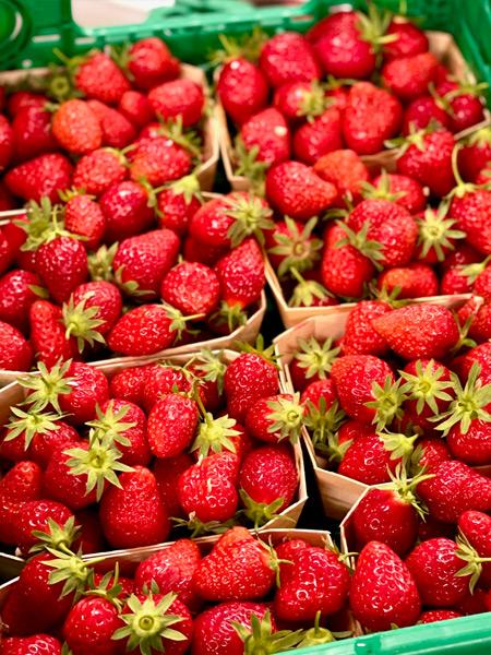 Mara de Bois Erdbeeren Hünenberg