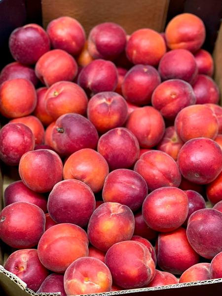 Rougecot Aprikosen Spanien
