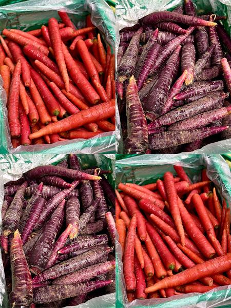 Farbige Karotten aus der Schweiz