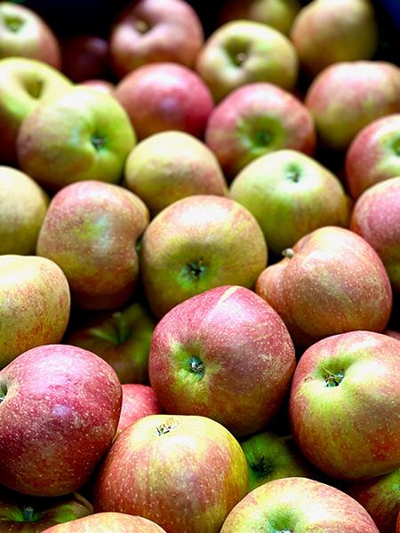 Boskoop Apfel - Bodensee-Region