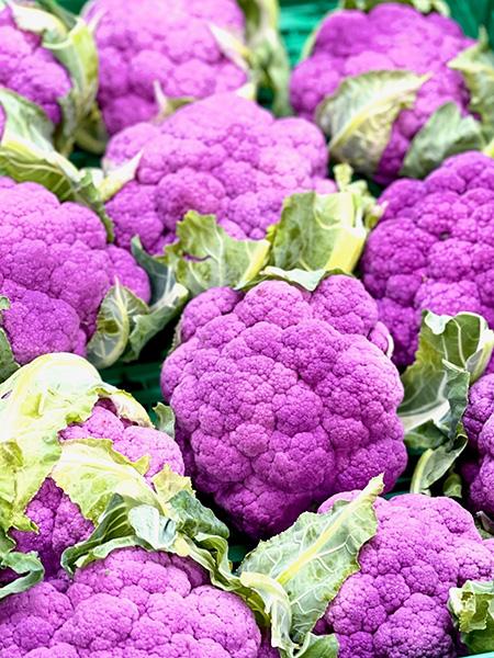Cimone - violetter Blumenkohl