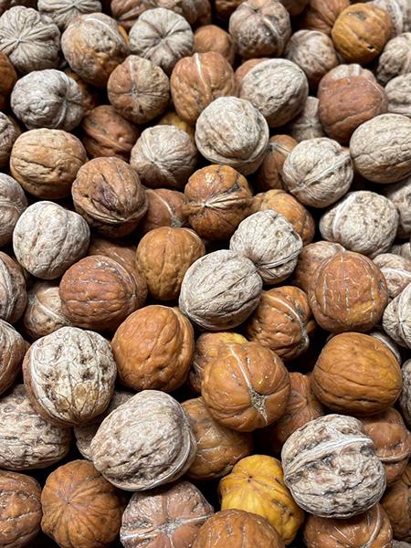Frische Baumnüsse aus Frankreich oder Italien