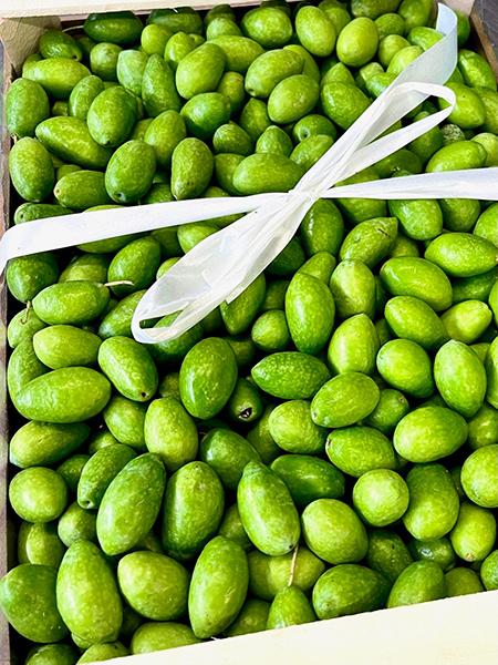 Grüne Oliven - Italien