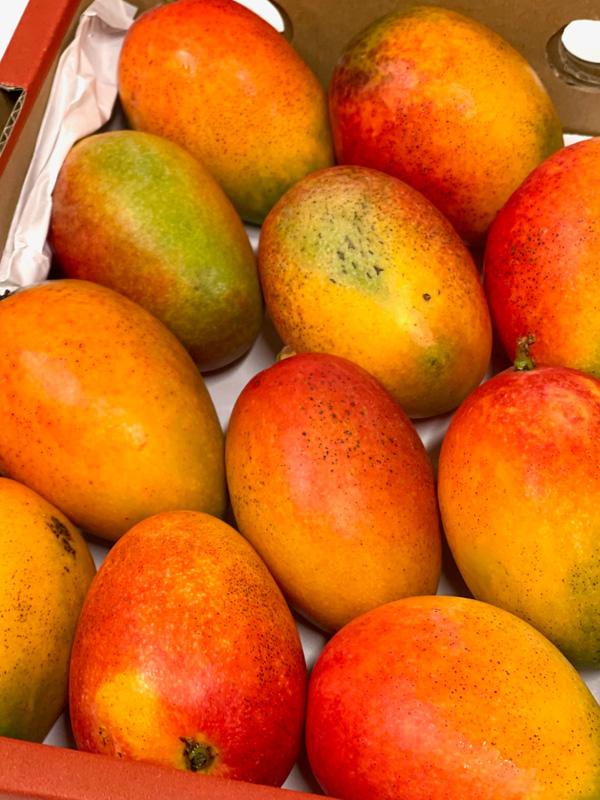 Mini Mango Irvin aus Spanien