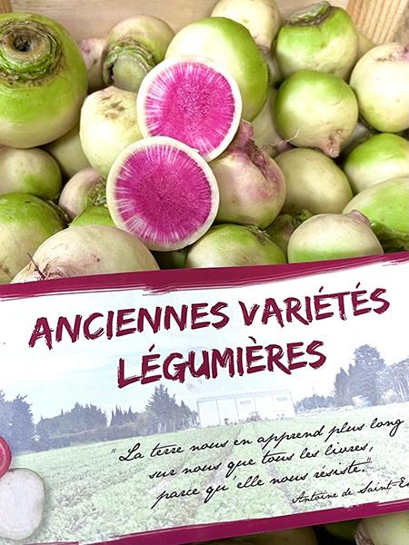 Wassermelonen Rettich - Frankreich